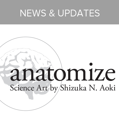 Aoki_anatomize_homepage_buttons-4.jpg