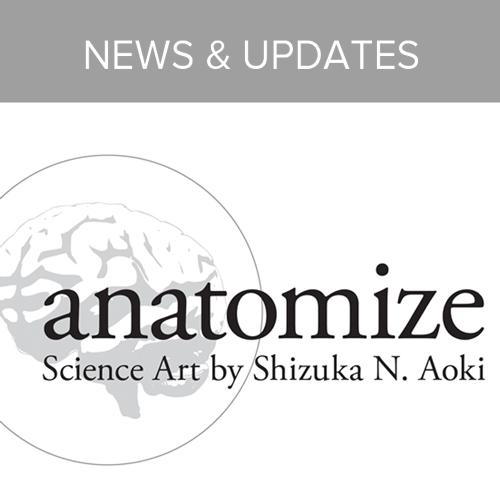 Aoki_anatomize_homepage_buttons-4.jpg