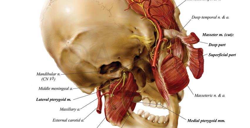 Anatomize_Homepage_Slider-4.jpg