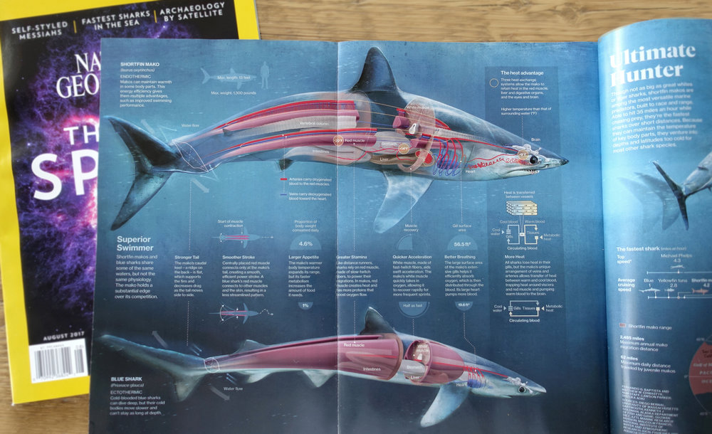 Check out the August 2017 issue of National Geographic for our illustrations on the FASTEST shark in the ocean, the shortfin Mako!