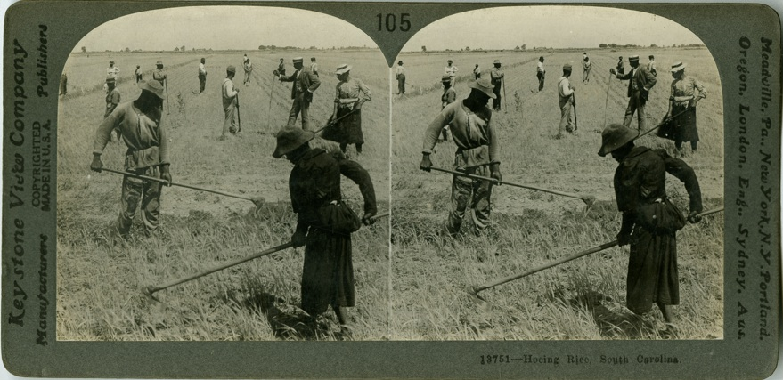 Hoeing Rice, Lowcountry digital Library