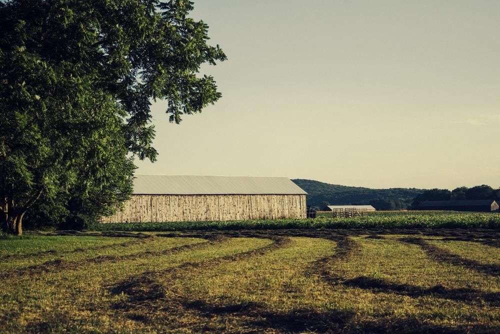 A farm off of 47, Amherst, Mass