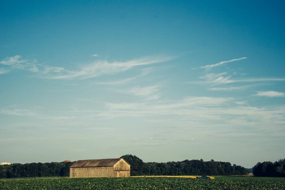 A tobacco barn, Amherst, Mass