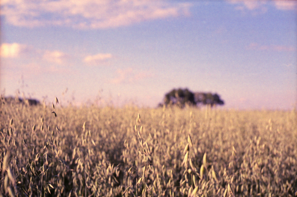 grass_northampton_field_sized.jpg