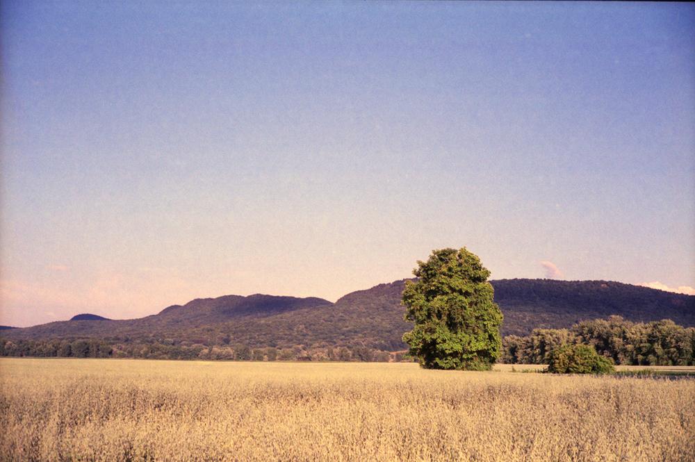tree_mountains_northampton_field_sized.jpg