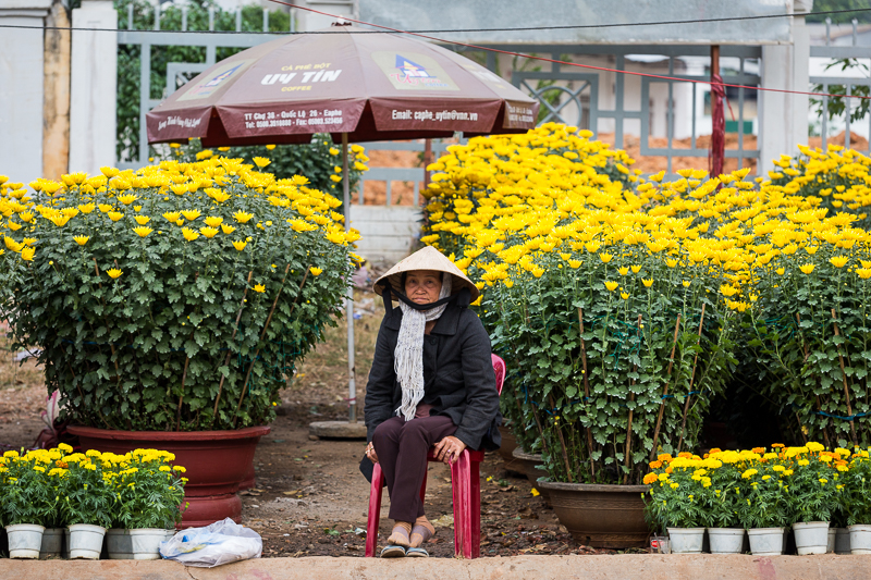 Putting things in perspective a woman is dwarfed by her Tet flower pots.