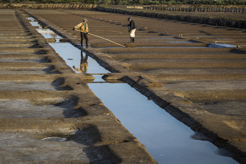 Tending the salt farm. Tavira, Portugal.