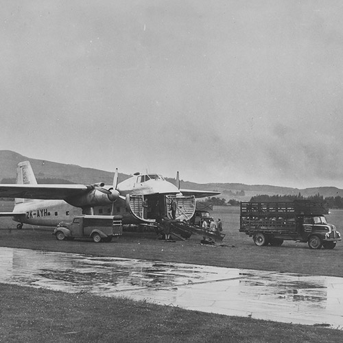 Type 170 loading sheep in New Zealand, 29 May 1952