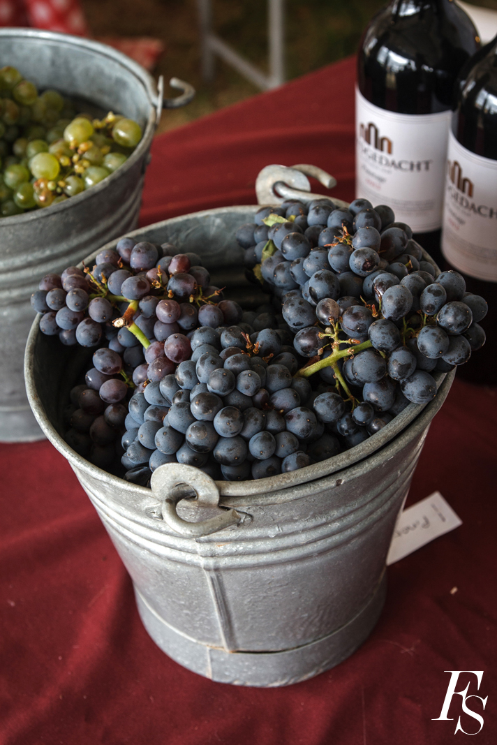 Feast-of-the-grape-2014-983