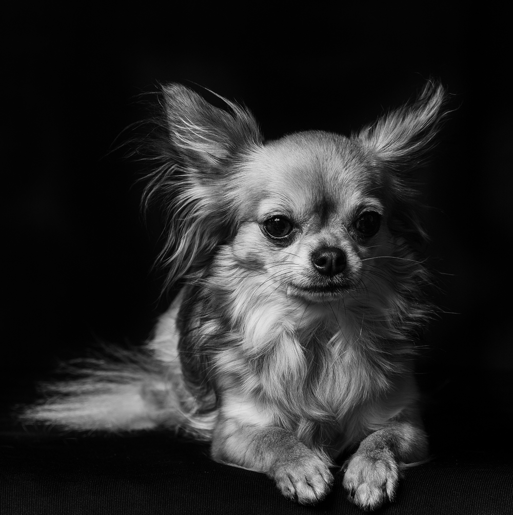 Blackpool-photographer-professional-pets-portrait-photography.jpg (4).jpg