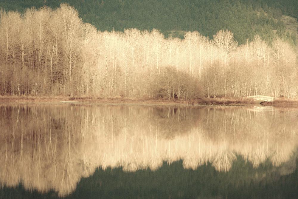 Mirror Woods_8x12.jpg