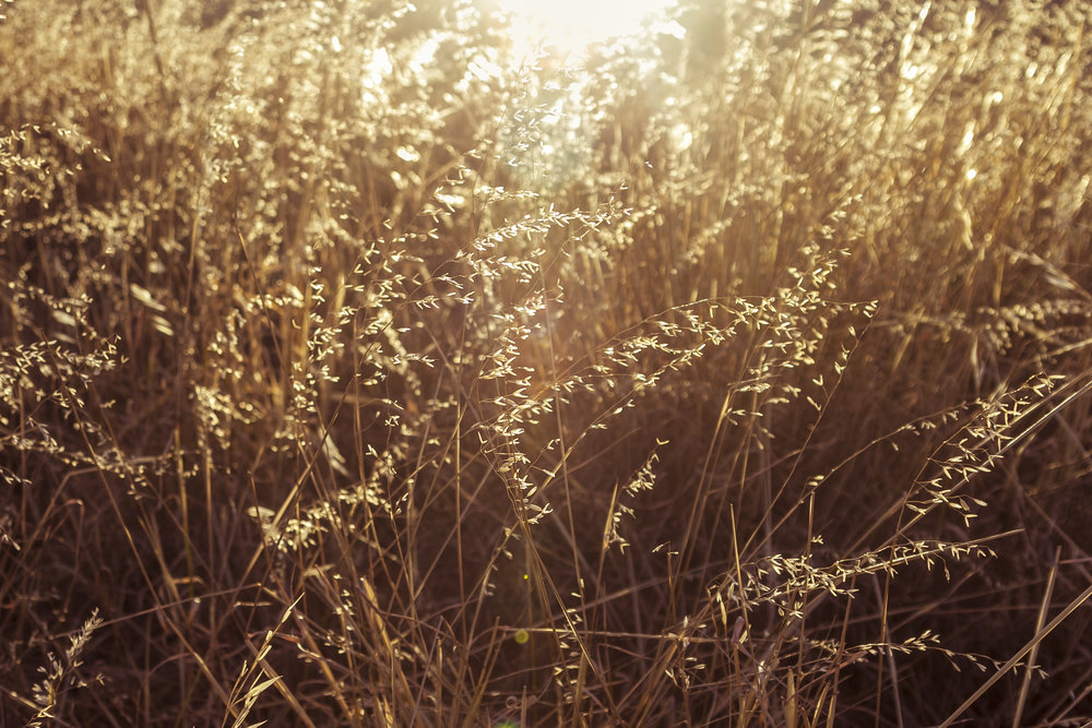 Sunlit Field_4x6.jpg