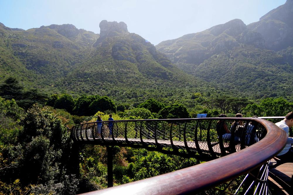 Kirstenbosch Canopy walk.JPG