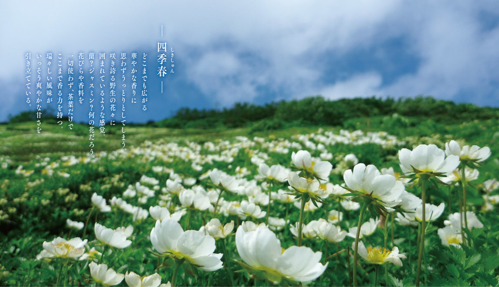 booklet_shikishun.jpg
