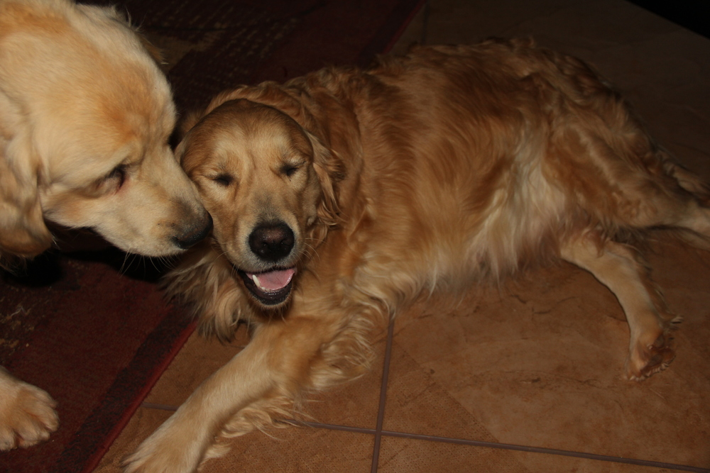 Bailey is whispering sweet nothings in her ear, I think she likes it...he is making her smile.