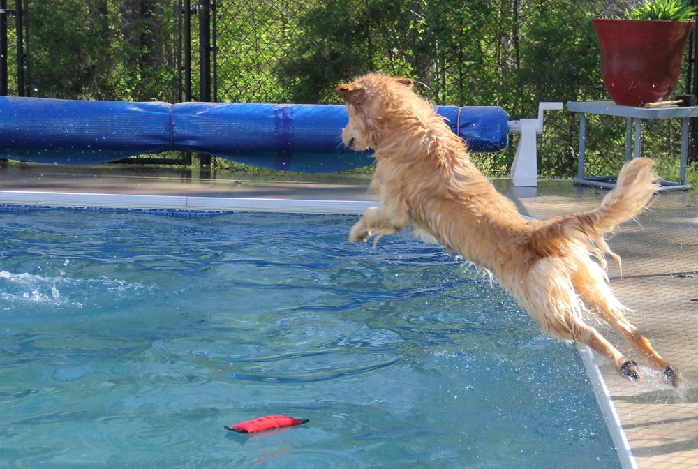 Autumn diving in...think I should enter these dogs into the diving contests???