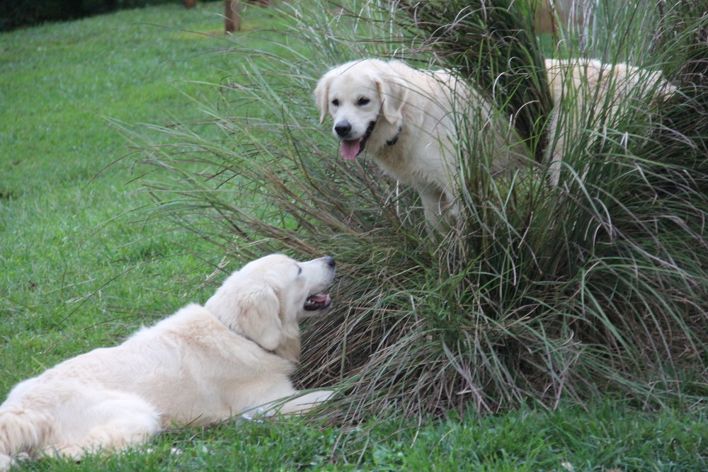 I'm inside the bush, you can't get me here, so there!!! Bo and Shiloh