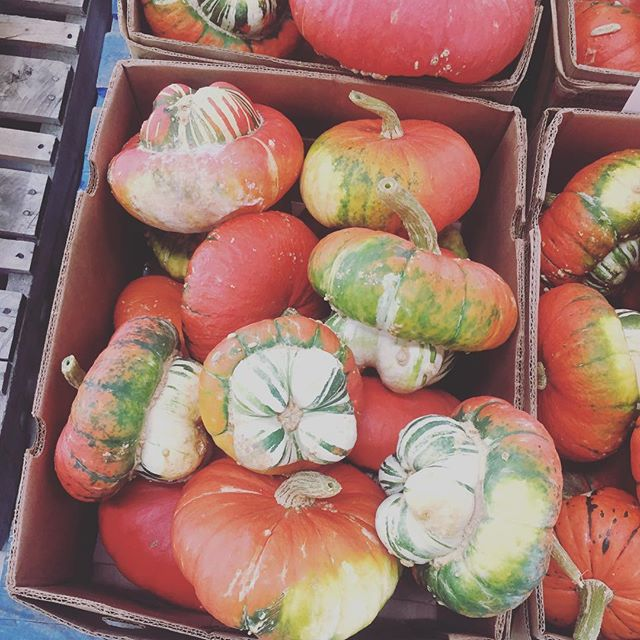 If you're as cool as these amazing winter squash, you'll be at the farmers market tomorrow to have some delicious lunch and dessert!  #ithacafarmersmarket #plantbased #nutritiousanddelicious #omnomnom