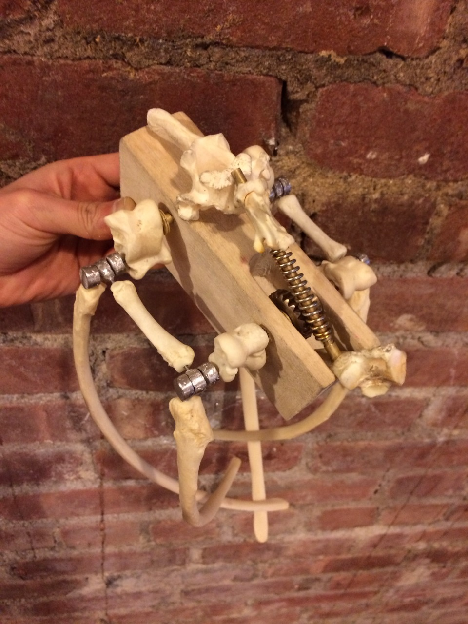 Little buggy creature made of bones fastened together using the Button Tap Joint