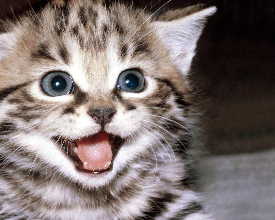 smiling-cat1.jpg