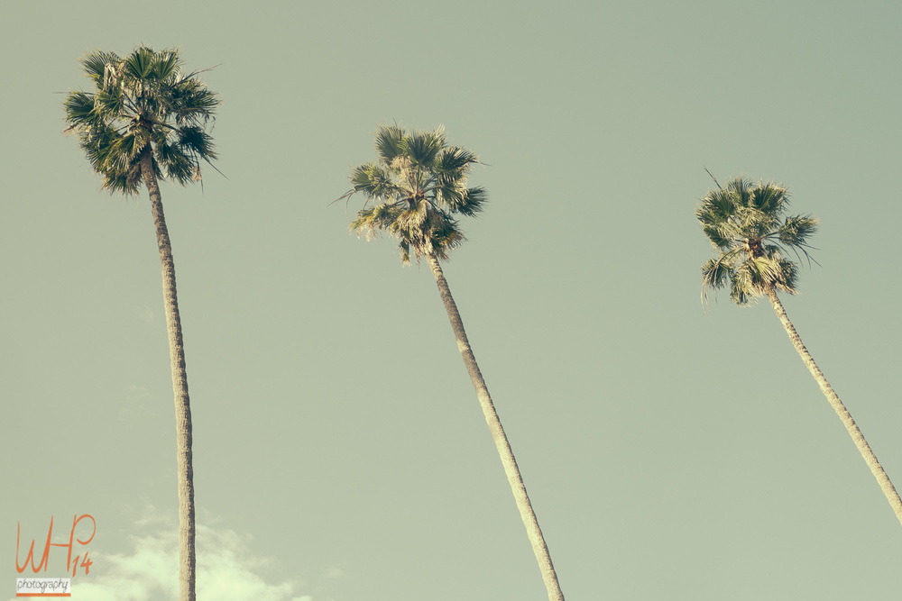 3 Palms In Cali