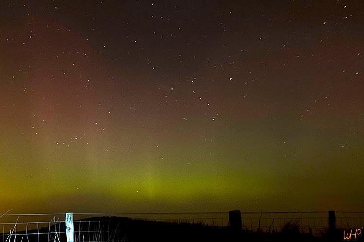 aurora grass sq.jpg