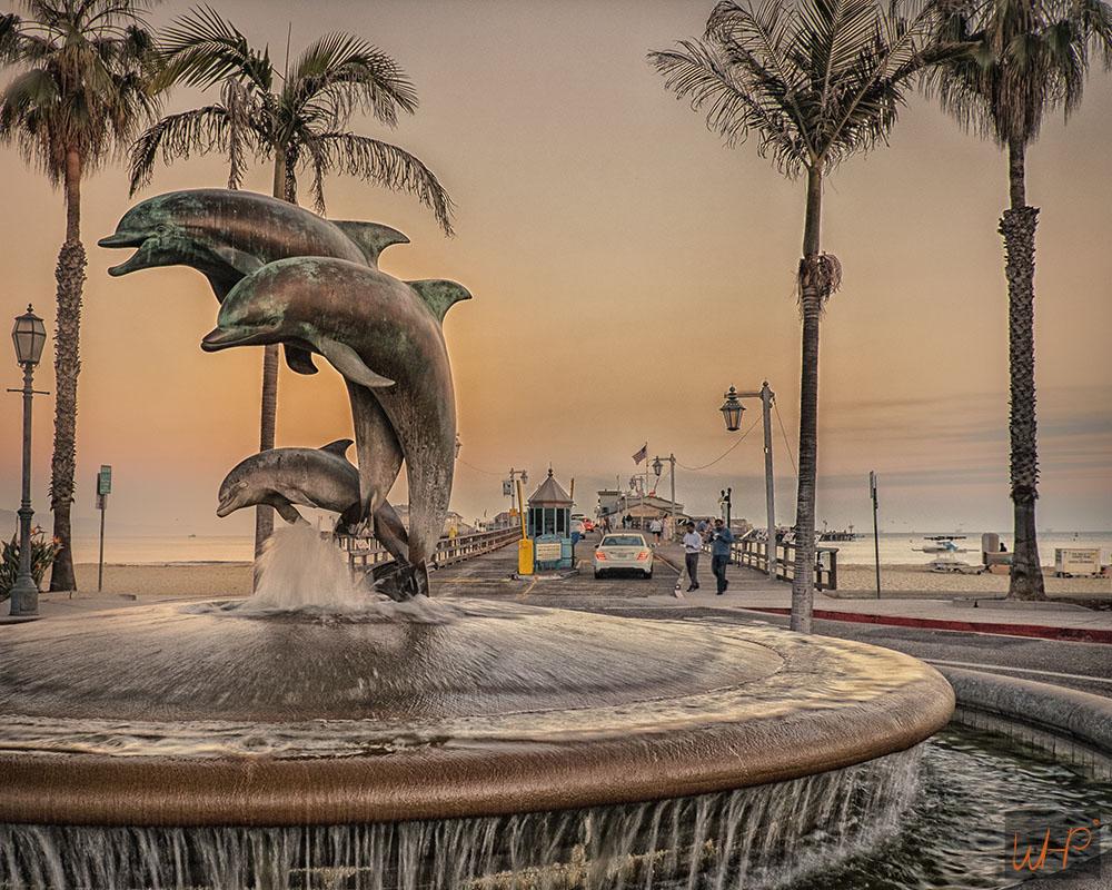 dolphin round sq.jpg