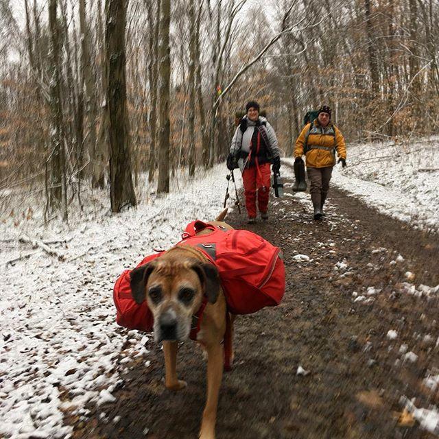 #hikingdog of the year