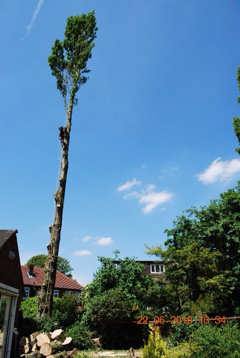 Abortec Tree Surgeons in Bolton