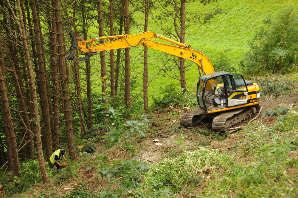 Arbortec The Best Tree Surgeons in Bolton
