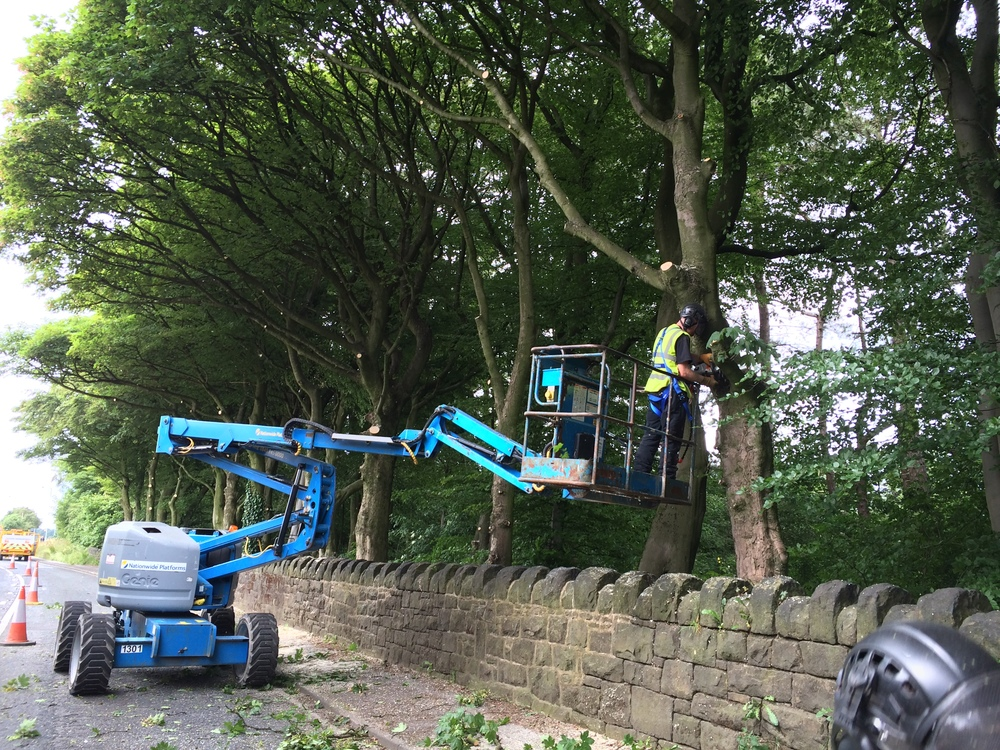 Arbortec Tree Surgeons BS3998 Crown Lifting