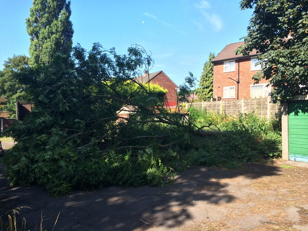 Arbortec Tree Surgeon in Bolton