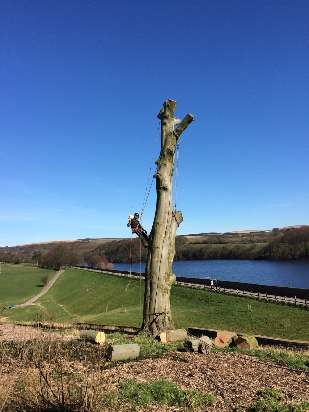 Arbortec Tree Surgeons in Bolton
