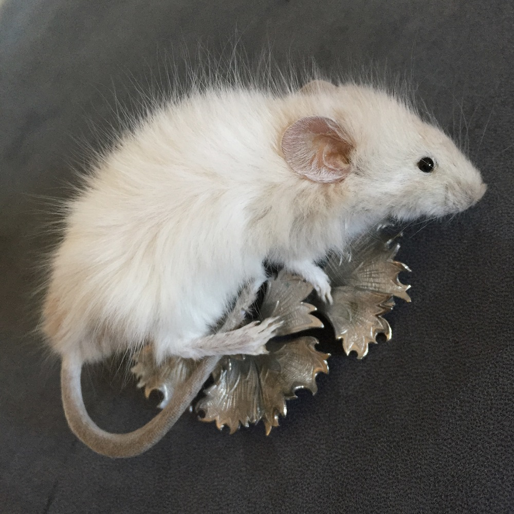 Taxidermy Mouse Brooch