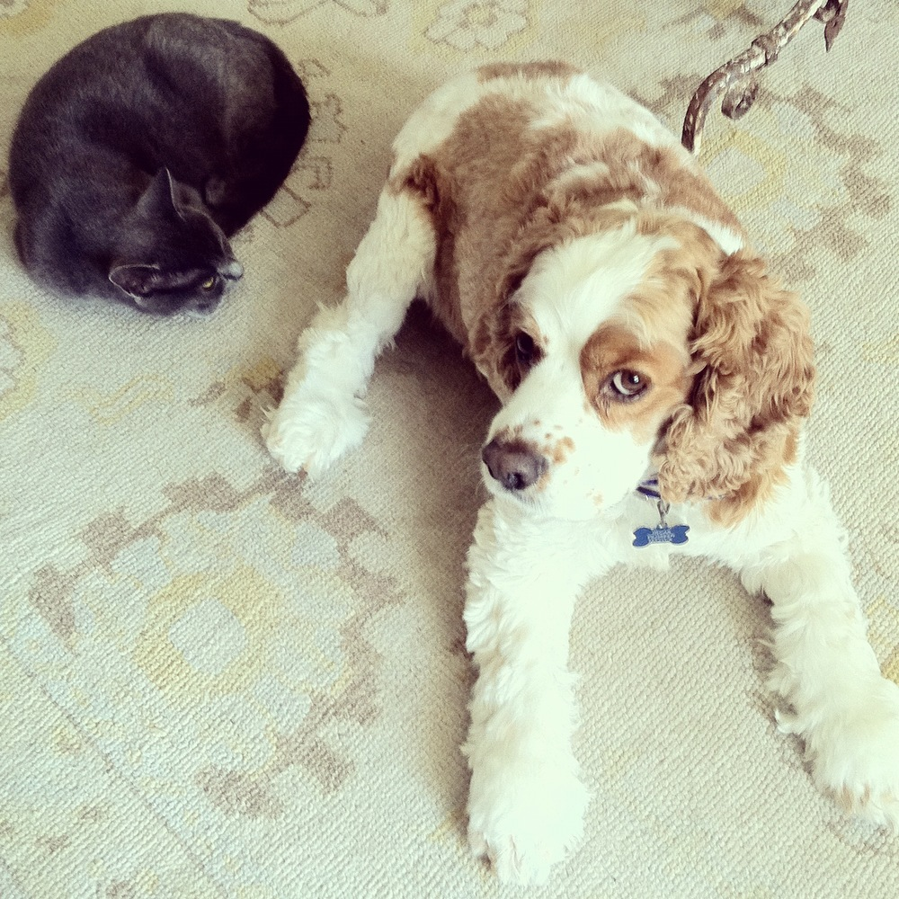Fur kids - Milly (cat) and Oscar (dog)