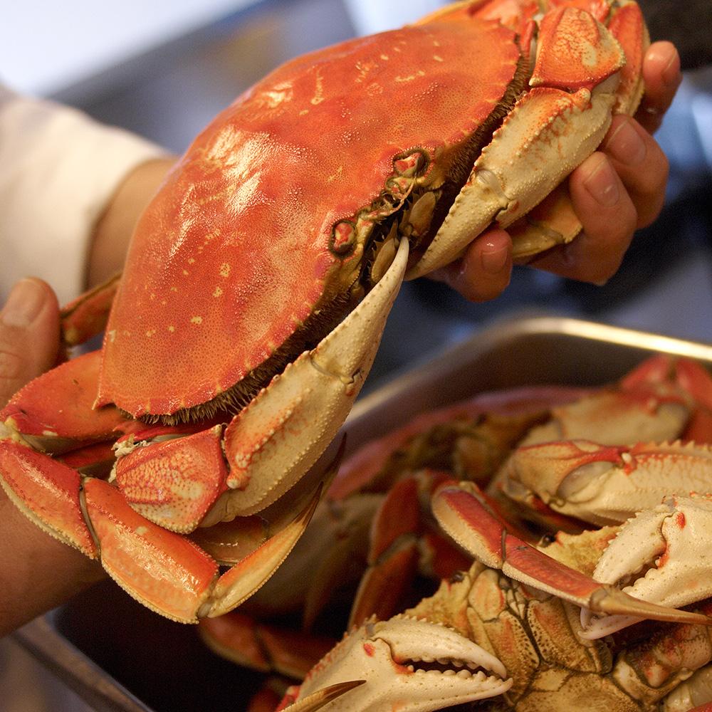 scomas_sausalito_crab_sq.jpg