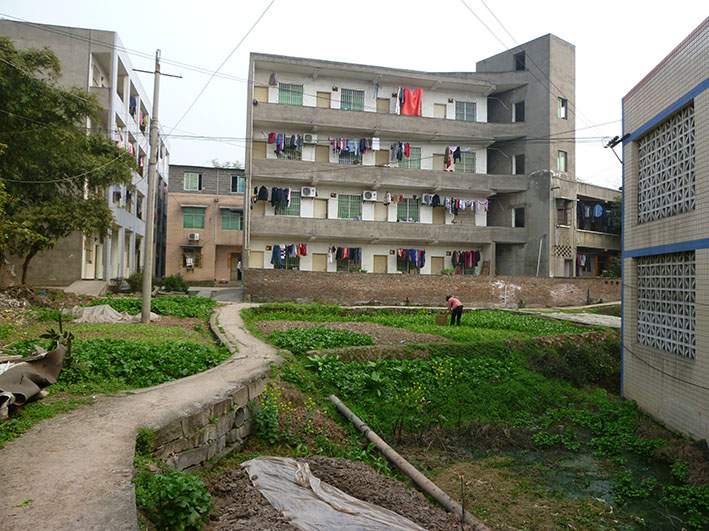 A living transect of Hailong Village, showing the intersection of agricultural, industrial, and residential uses