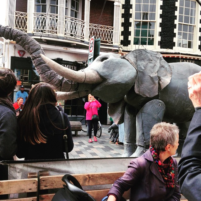 There's an elephant in the centre of Brighton