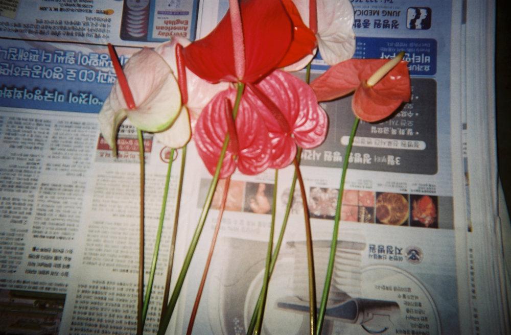 Disposable_S_Salehi37.jpg