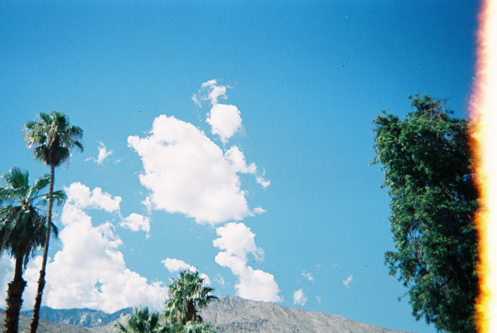 Joshua-tree_047.jpg