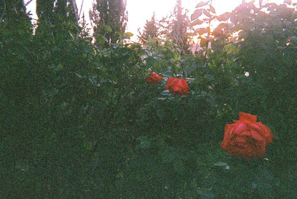 anais11-049.jpg