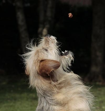 dog-403020_640.jpg
