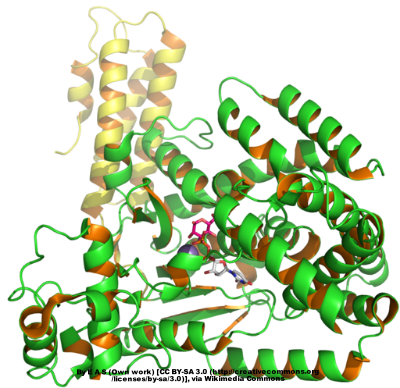 Protein structure of C. diff toxin B
