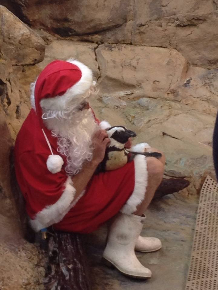 Kohl the #Penguin getting a special visit from #Santa. #AudubonAquarium #NOLA #holidays #Christmas #animals #cute