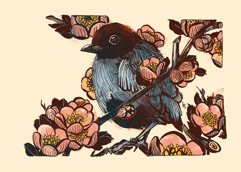 Hooded Pitta and Flowering Quince
