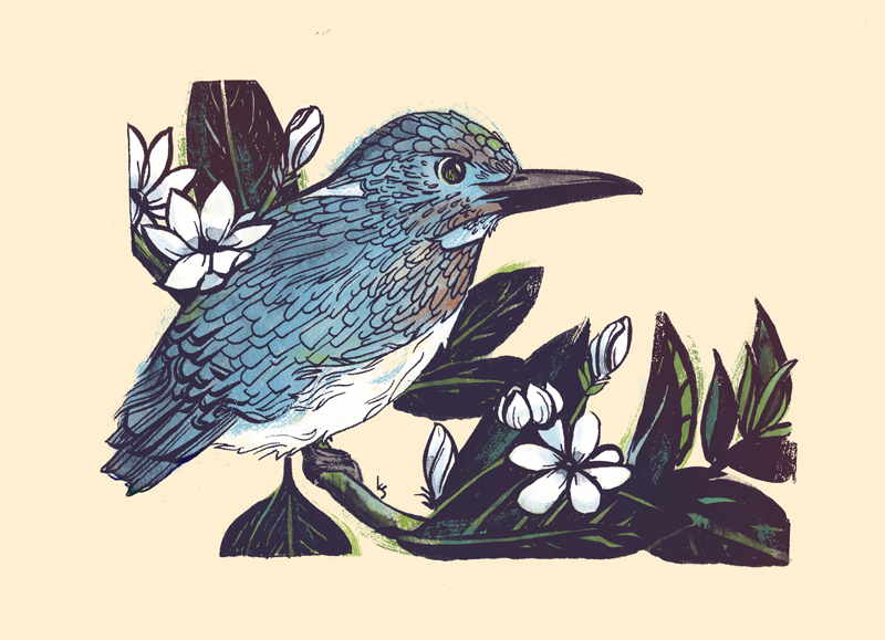 Cerulean Kingfisher and Arabian Jasmine