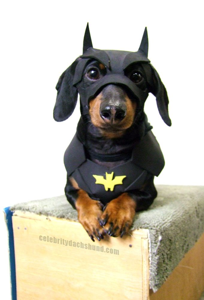 "The ""Bat"" Dog"