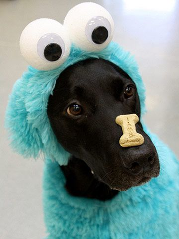 "The ""CookieMonster"""