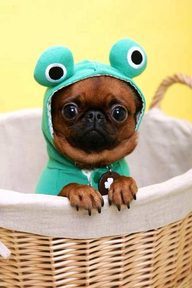 """The """"Froggy"""""""