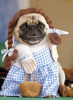 "The ""Dorothy"""